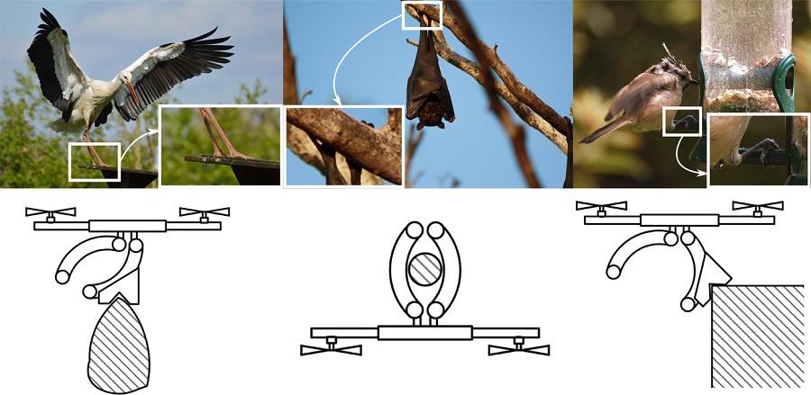 Des chercheurs équipent un drone de griffes inspirées des chauves souris